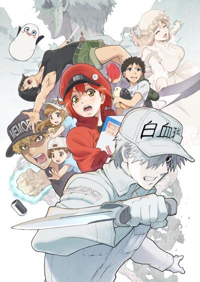 Download Hataraku Saibou!! (main) Anime